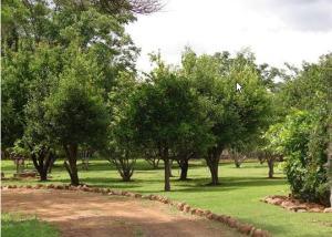 Hierdie is net 'n paar van die vrugtebome op die einste plaas waarvoor ek my so geskaam het. Wie wil nou die mandjiesvol perskes, vye, lemoene, mango's, avokadopere, appelkose, nartjies en koejawels eet as die dorpskinders bokse met koelkamer-appels eet?