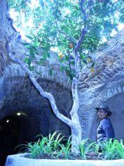 By Fresno underground Gardens