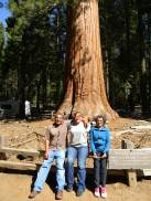 Giant Sequoia's in Yosemity National Park