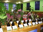 Fresh examples of fynbos in our library